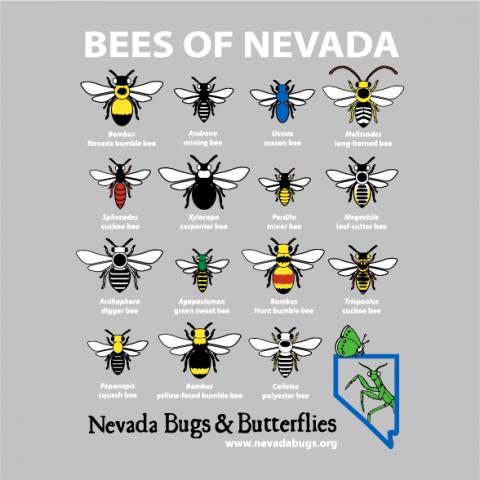 NV Bugs and Butterflies t-shirt design